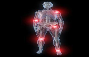 Nerves and Skeleton
